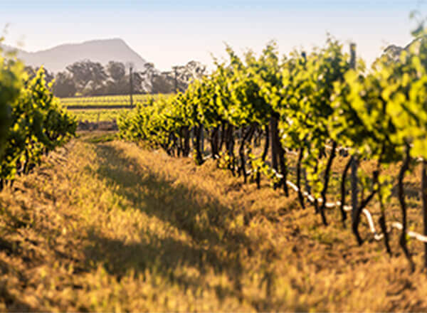 Wine Tour in the Hunter Valley