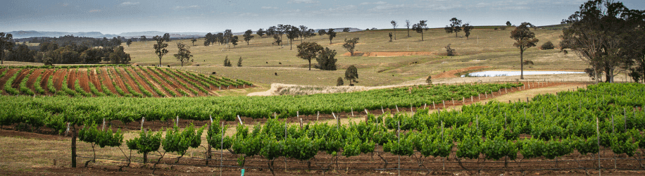 Winery tours in Hunter Valley